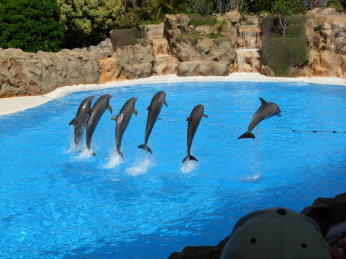 dolphins_at_loro_parque.jpg